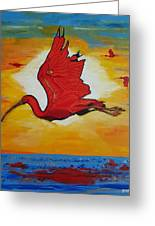 Bird Of Beauty, Loves Light In Flight Greeting Card