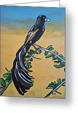 Bird Of Beauty, Ngiculela Greeting Card
