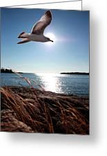 Bird Of Life Greeting Card