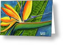 Bird Of Paradise #300b Greeting Card