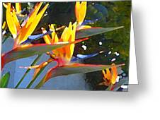 Bird Of Paradise Backlit By Sun Greeting Card