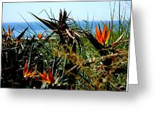 Bird Of Paradise By The Sea Greeting Card
