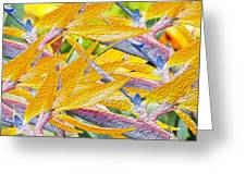 Bird Of Paradise Collage Greeting Card