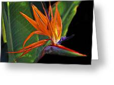 Bird Of Paradise Digital Art Greeting Card