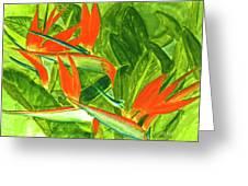 Bird Of Paradise Flower #55 Greeting Card