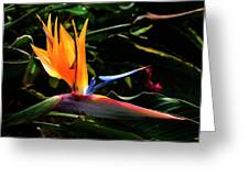Bird Of Paradise Flower Greeting Card by Brian Harig