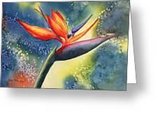 Bird Of Paradise Flower Greeting Card