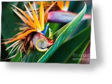 Bird Of Paradise Gecko Greeting Card