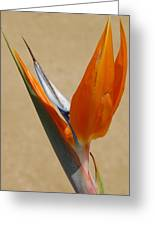 Bird Of Paradise II Greeting Card