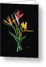 Bird Of Paradise In Black Greeting Card