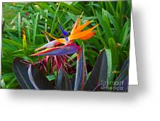 Bird Of Paradise Kalon Greeting Card