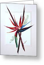 Bird Of Paradise Lily Greeting Card