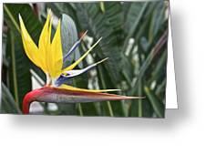 Bird Of Paradise Longwood Gardens Greeting Card