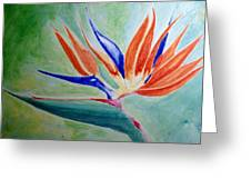 Bird Of Paradise, Noon Greeting Card