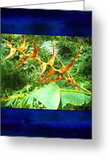 Bird Of Paradise Quepos Costa Rica Greeting Card