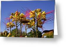 Bird Of Paradise Shrub Greeting Card