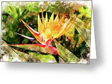 Bird Of Paradise Wc Greeting Card