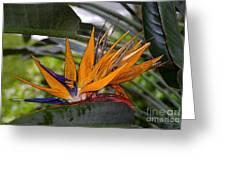 Bird Of Paradise Work Number Three Greeting Card