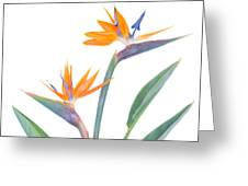 Bird Of Paradize Flowers Greeting Card