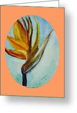 Bird Of Paridise Greeting Card