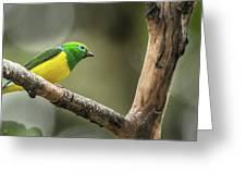 Bird Of Peru Greeting Card