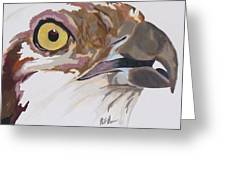 Bird Of Prey  Osprey Greeting Card