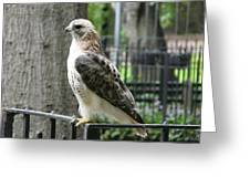 Bird Of Prey Greeting Card