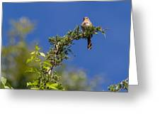 Bird On A Branch Greeting Card