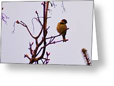 Bird On A Bud Greeting Card