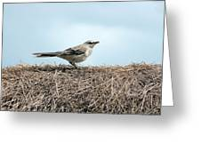 Bird On A Grass Roof Greeting Card