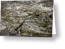 Bird On A River Greeting Card
