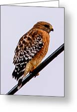 Bird On A Wire With Attitude Greeting Card