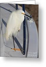 Bird On Boat Greeting Card