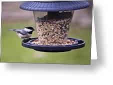Bird On Feeder Greeting Card
