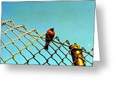 Bird On Fence Greeting Card