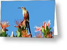Bird On Protea Greeting Card