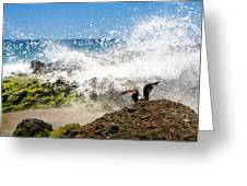 Bird On Rock Greeting Card