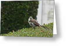 Bird On The Hedges Greeting Card