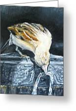 Bird Original Oil Painting Greeting Card