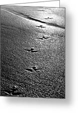 Bird Prints In The Sand Black And White Greeting Card