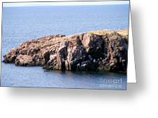 Bird Rock Greeting Card