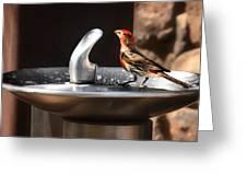 Bird Spa Greeting Card by Christine Till