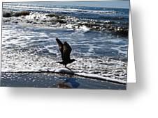 Bird Taking Flight On The Shore Greeting Card