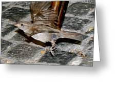 Bird Taking Flight Greeting Card