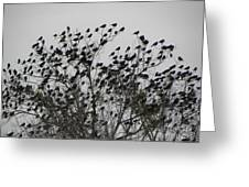 Bird Tree Greeting Card