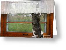 Bird Watching Kitty Cat Greeting Card