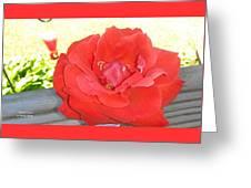 Bird Watching Red Rose Greeting Card
