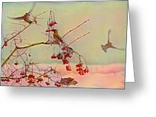 Bird Waxwing Greeting Card