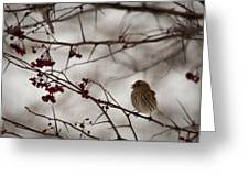 Bird With Berry Greeting Card