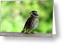 Bird With Punk Attitude Greeting Card